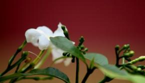 kwiat_2-1